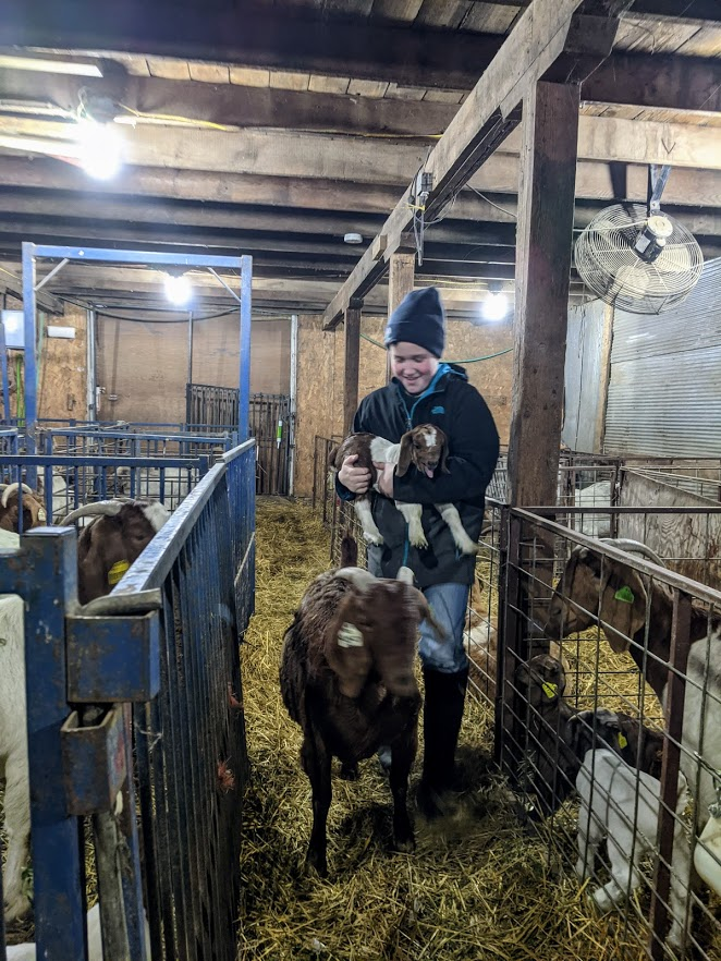 2020 Christmas Vacation Weighing And Taggin Baby Goats 1