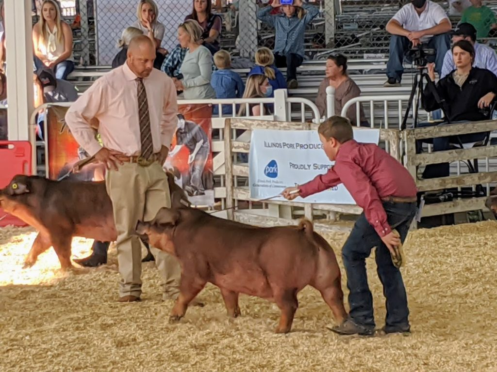 Jacob Driving His Class Winning Duroc At The 2020 National Barrow Show 1