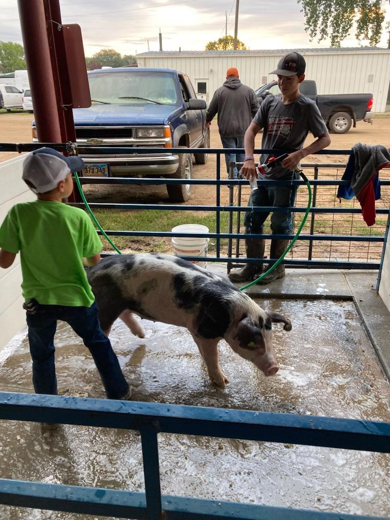 Washing Pig 1